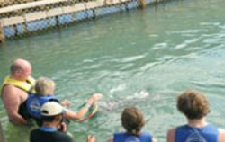 Dolphins Interactive Tour, Bali Dolphins Tour, Swim with dolphin