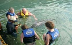 Swim Dolphin Bali,Bali Dolphins Tour,Dolphins Interactive Tour