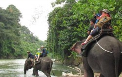 Tangkahan Elephant Riding image, Grand Tour Experience 19 Days, Sumatra Adventure