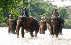 Leuser National Park Expedition 8 Days 7 Nights, Sumatra Adventure, Tangkahan Elephant Safari
