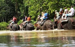Tangkahan Elephant Safari,Sumatra Adventure,Explore Sumatra 13 Days 12 Nights