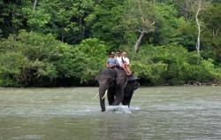 Elephant Safari image, Explore Tangkahan Tour A 7 Days 6 Nights, Sumatra Adventure