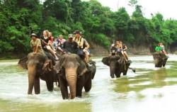 Explore Tangkahan Tour B 7 Days 6 Nights, Sumatra Adventure, Elephant Safari