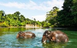 Tangkahan North Sumatra,Sumatra Adventure,Explore Tangkahan 8 Days 7 Nights