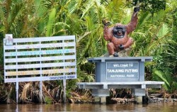 Tanjung Puting National Park,Borneo Island Tour,Borneo Overland Trip I 8 Days 7 Nights