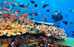 Tatawa Island Diving image, Komodo Island Liveboard 7 Days 6 Nights, Komodo Adventure