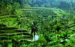 Tegalalang rice field image, Kintamani and Tirta Empul Tour, Bali Sightseeing