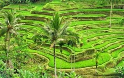 Three Full Days Package, Bali Tour Packages, Tegalalang Rice Terrace