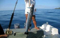 Marine Adventure Fishing, Bali Fishing, Fishing Bali