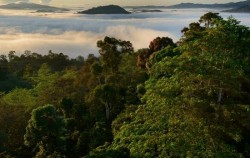 Tropical Rainforest Borneo,Borneo Island Tour,Orangutan Tour 4 Days 3 Nights