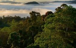 Tropical Rainforest Borneo image, Orangutan Tour 4 Days 3 Nights, Borneo Island Tour