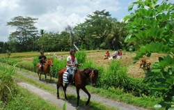 Ubud Horse Riding, Bali Horse Riding, Horse Riding Adventure