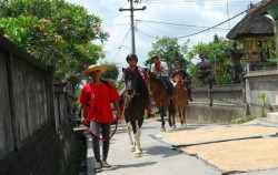 Ubud Horse Riding,Bali Horse Riding,Ubud Horse Riding