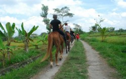 Ubud Horse Riding, Horse Riding See Rice Field