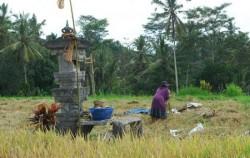 Farmer Activity,Bali Horse Riding,Ubud Horse Riding