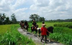 Ubud Horse Riding, Enjoy Horse Riding
