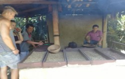Visit to Luwak Coffer Maker,Bali Cycling,Bali Great Bike Tour