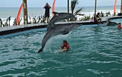 Wake Bali Dolphin, Dolphins Attraction