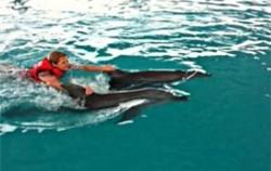 Wake Bali Dolphin, Wake Bali Dolphins
